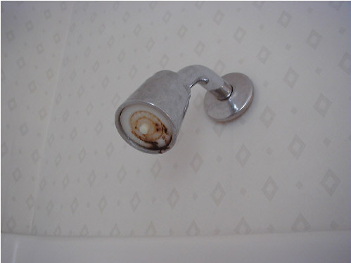 Mold In Shower Head mold in your home
